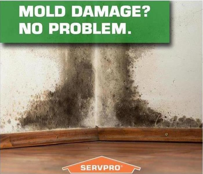 Why SERVPRO Delaware, Oh Residents:  Follow These Mold Safety Tips If You Suspect Mold