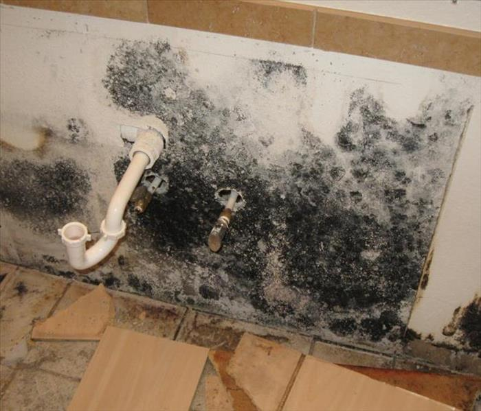 Mold Remediation How does Mold Get into your Home?